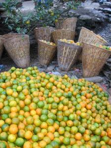 de beroemde mandarijnen van Bobok